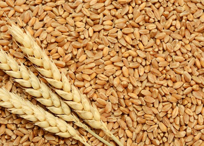 trigo import export commodities